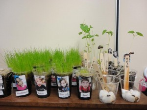 Some of our gardening projects from this spring!